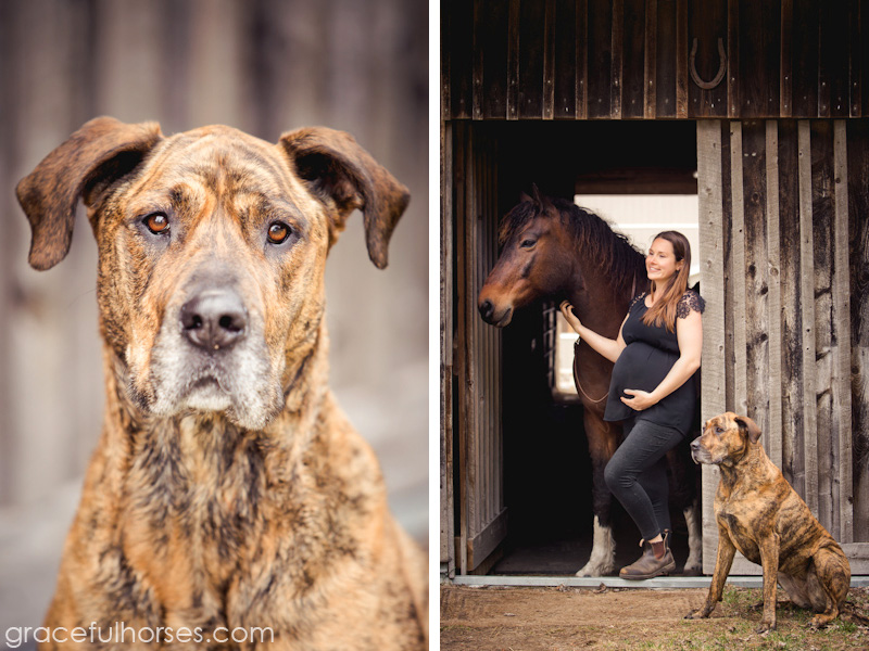 Maternity photos with horse and dog