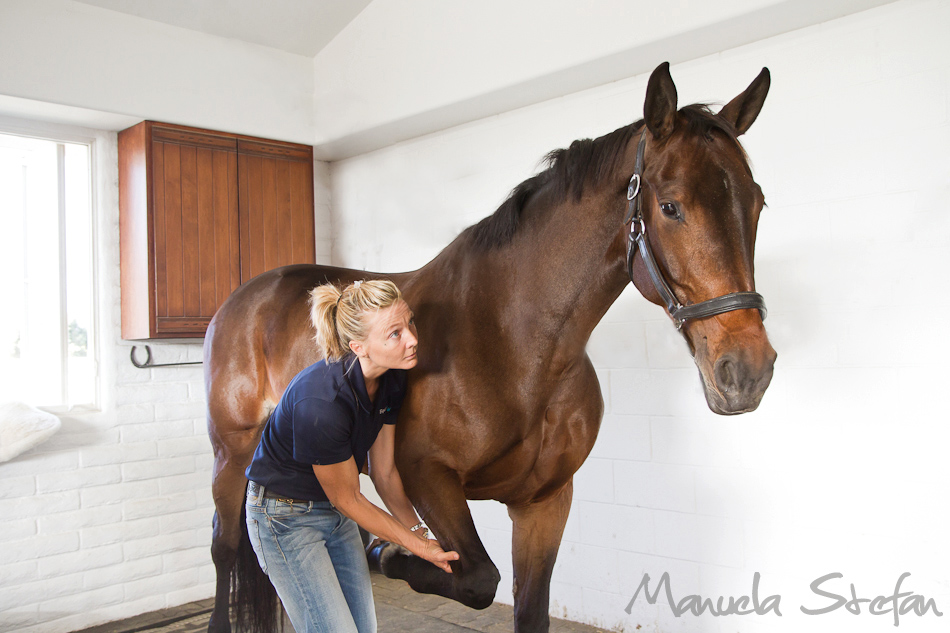 Jane Wesson working on front leg of horse
