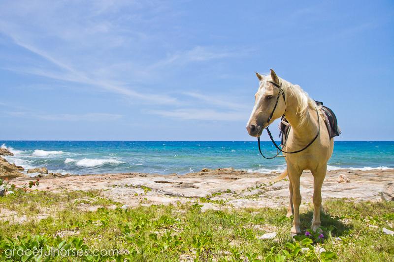 Braco Stables Jamaica horse