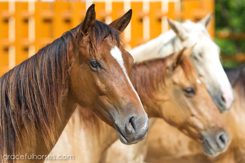 Braco Stables Jamaica horses