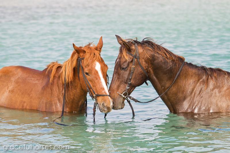 Braco Stables horses in the ocean
