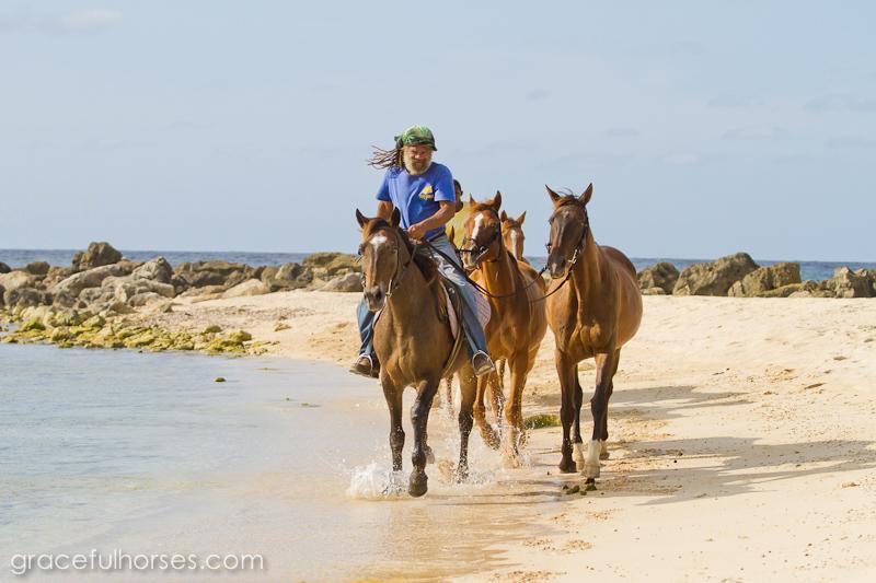 Braco Stables horses