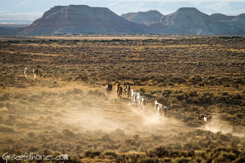 Big Horn Basin mustangs