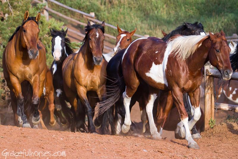 Gros Ventre River Ranch horses