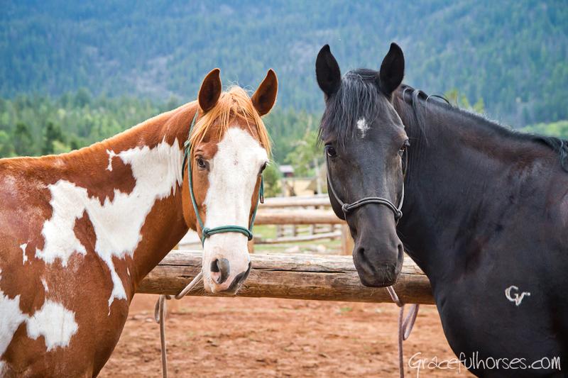 Horses at Gros Ventre River Ranch