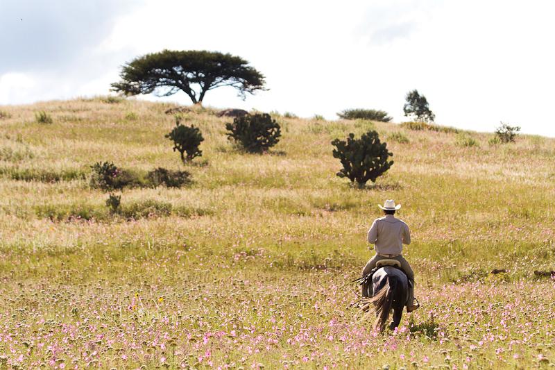 Aftrenoon ride at Rancho Las Cascadas