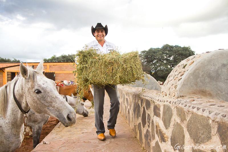 Feeding horses at Rancho las Cascadas