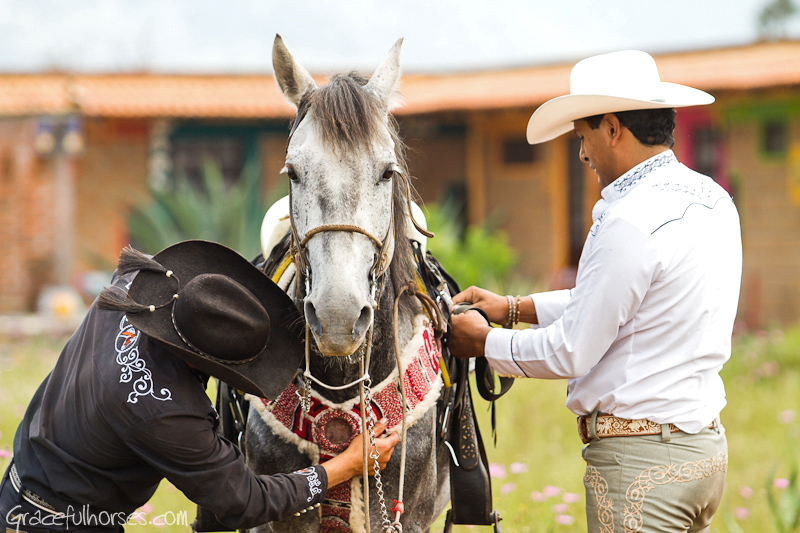 Horse getting ready for ride