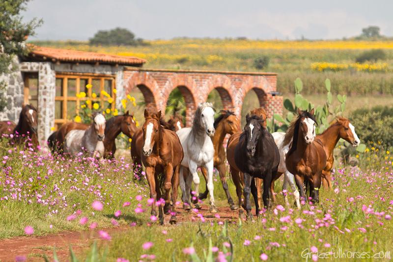 Rancho Las Cascadas horses