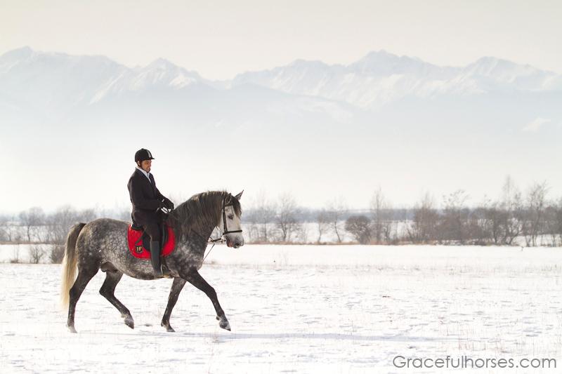 Rider and Lipizzaner stallion at Sambata de Jos