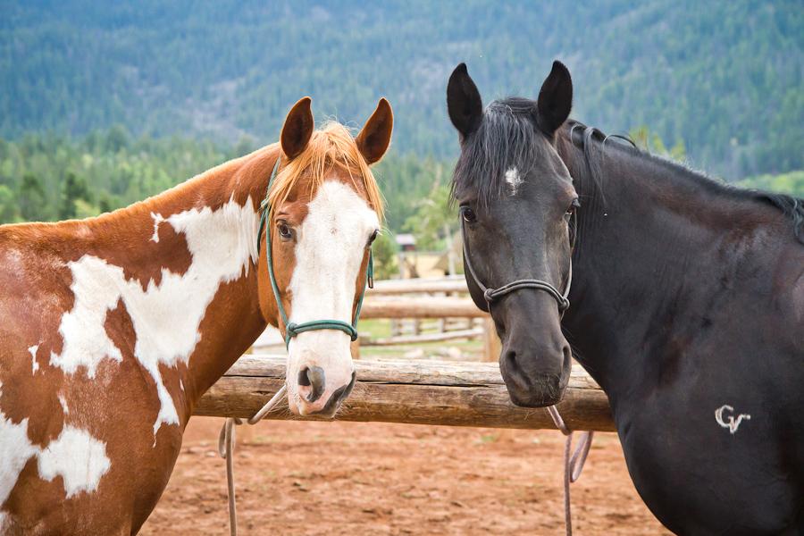 Horses at Western ranch