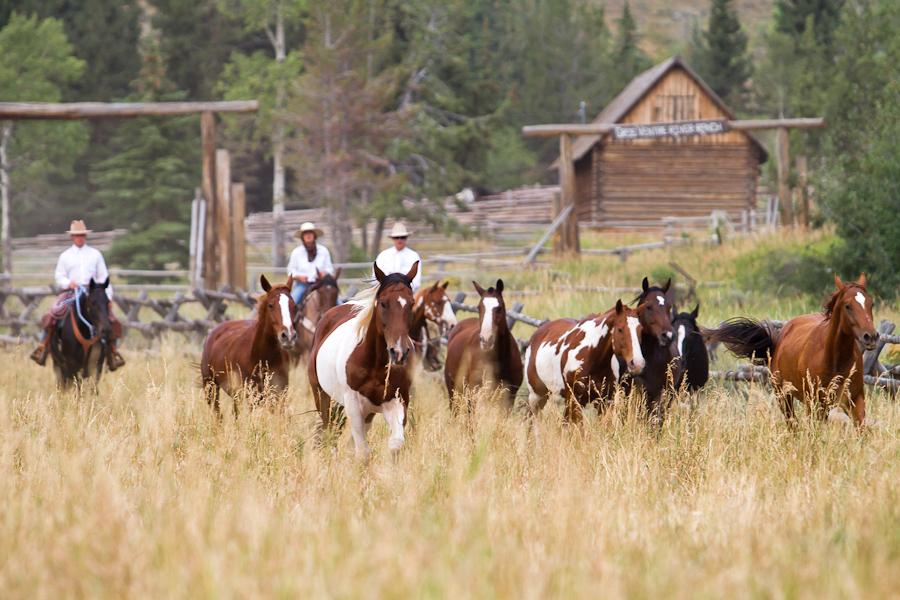 Western US ranch horses