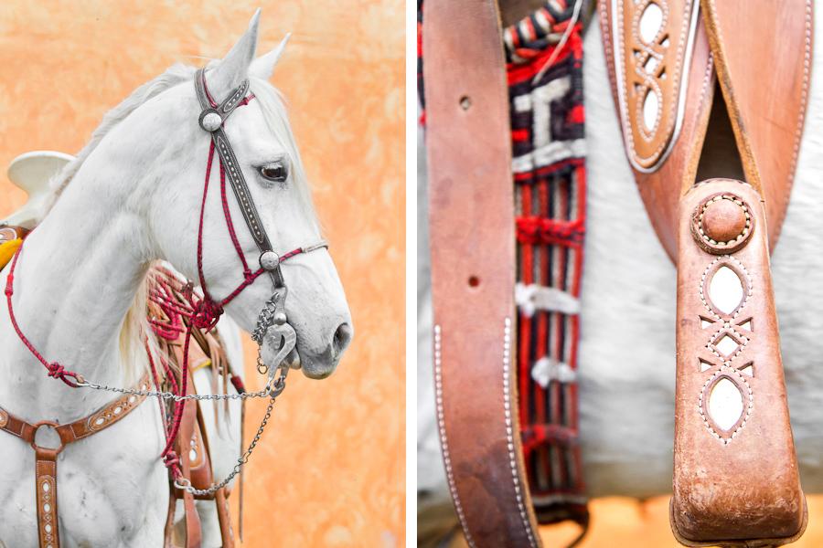 Creative equine portrait