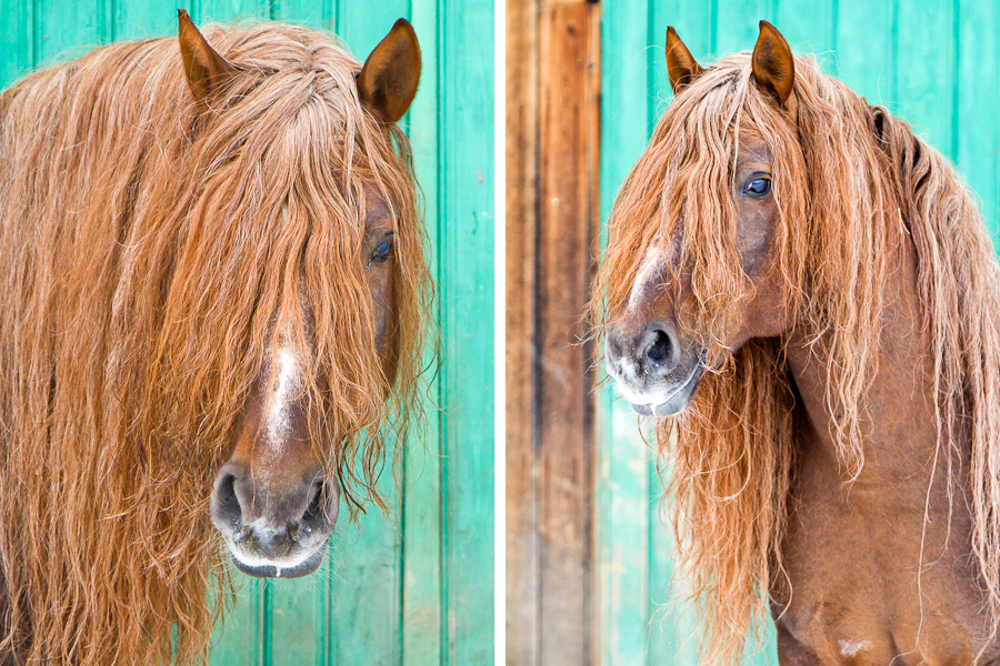 Equine portrait photographer