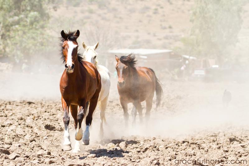 Rancho Xotolar horses