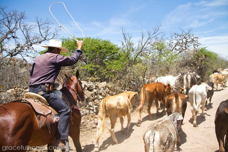 Rancho Xotolar vaqueros