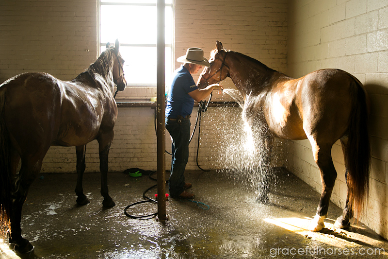 Guy McLean washing horses