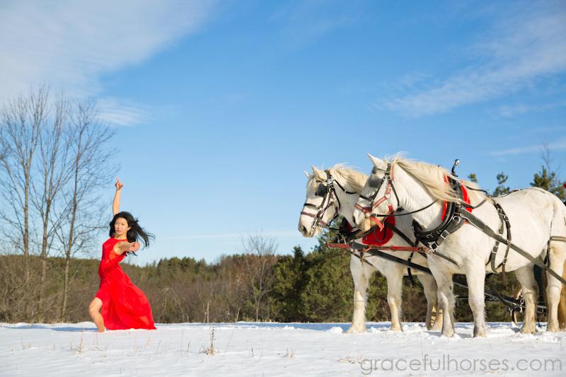 Creative equine photos