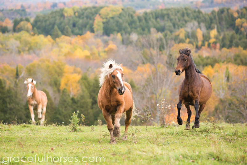 Freedom Valley Horse Rescue horses