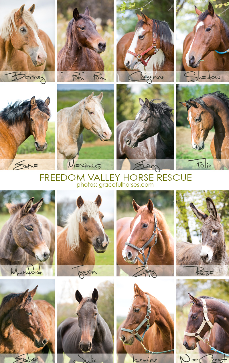 Freedom Valley Horse Rescue