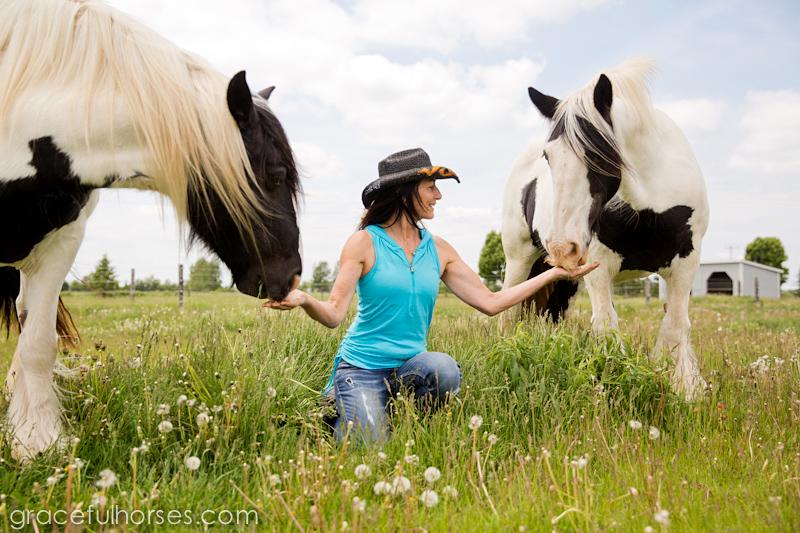 Gypsy Vanner mares