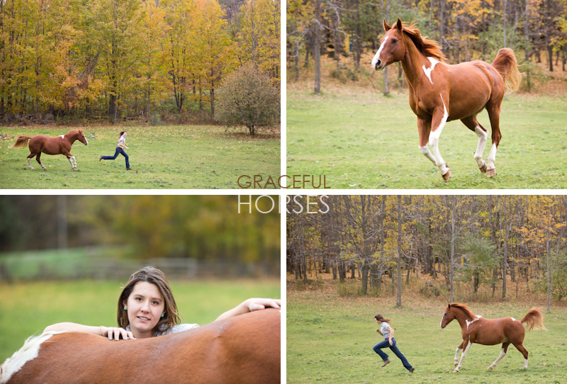 Equine photography in Ontario