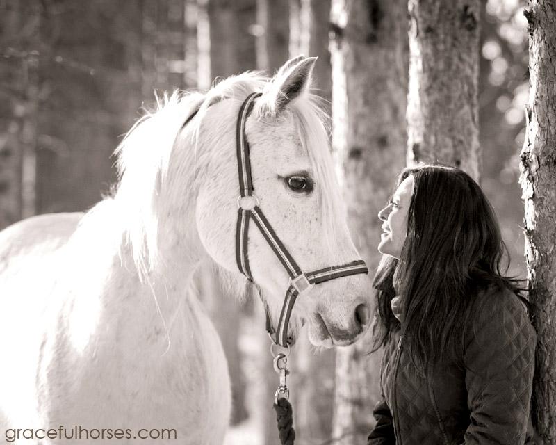 Equine portraits Ontario