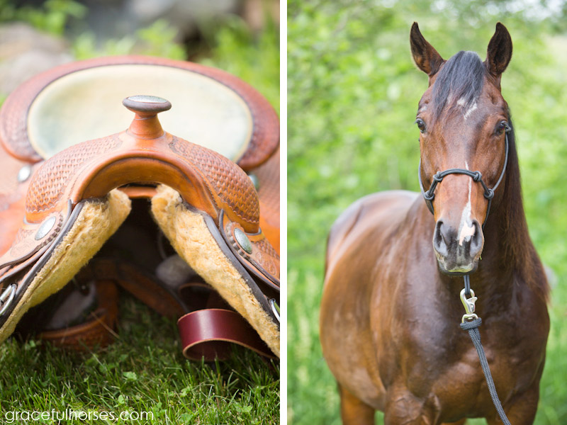 Equine and ranch photographer