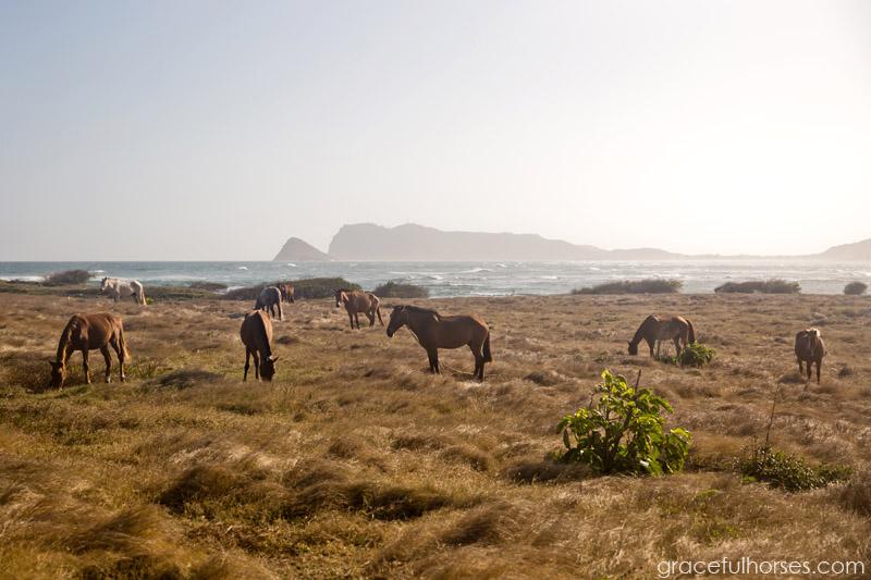 Atlantic Shores Stables pasture