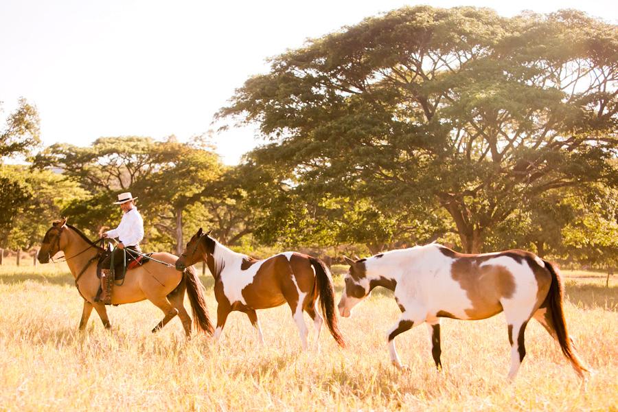 Horse ranch Costa Rica