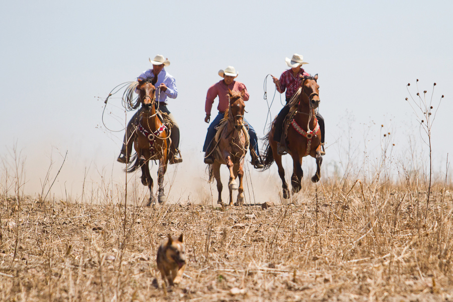 Mexican vaqueros
