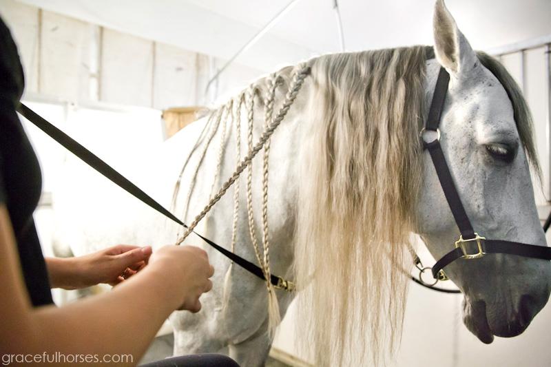 Cavalia horse groomer
