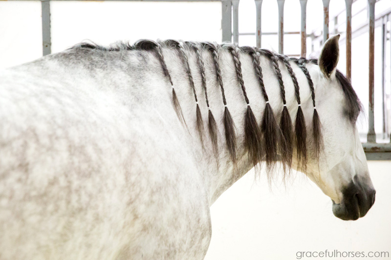 Cavalia stables