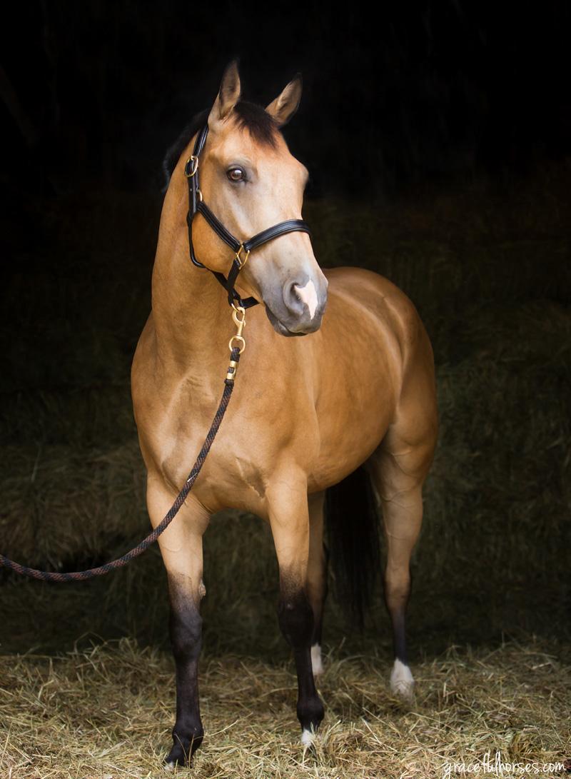 Horse photographer Ontario