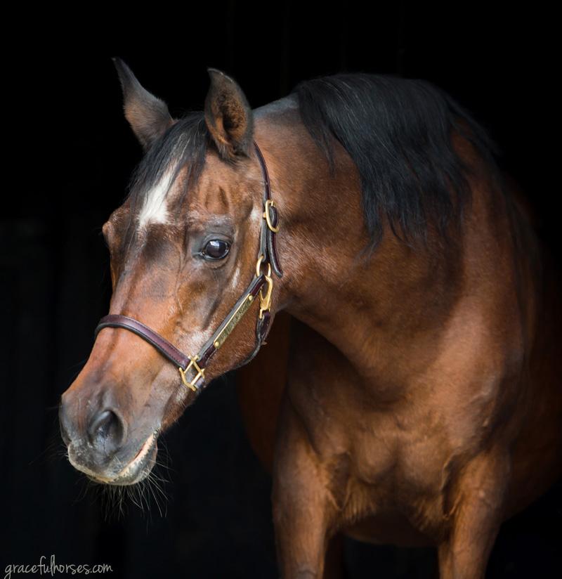 Elegant equine portraits