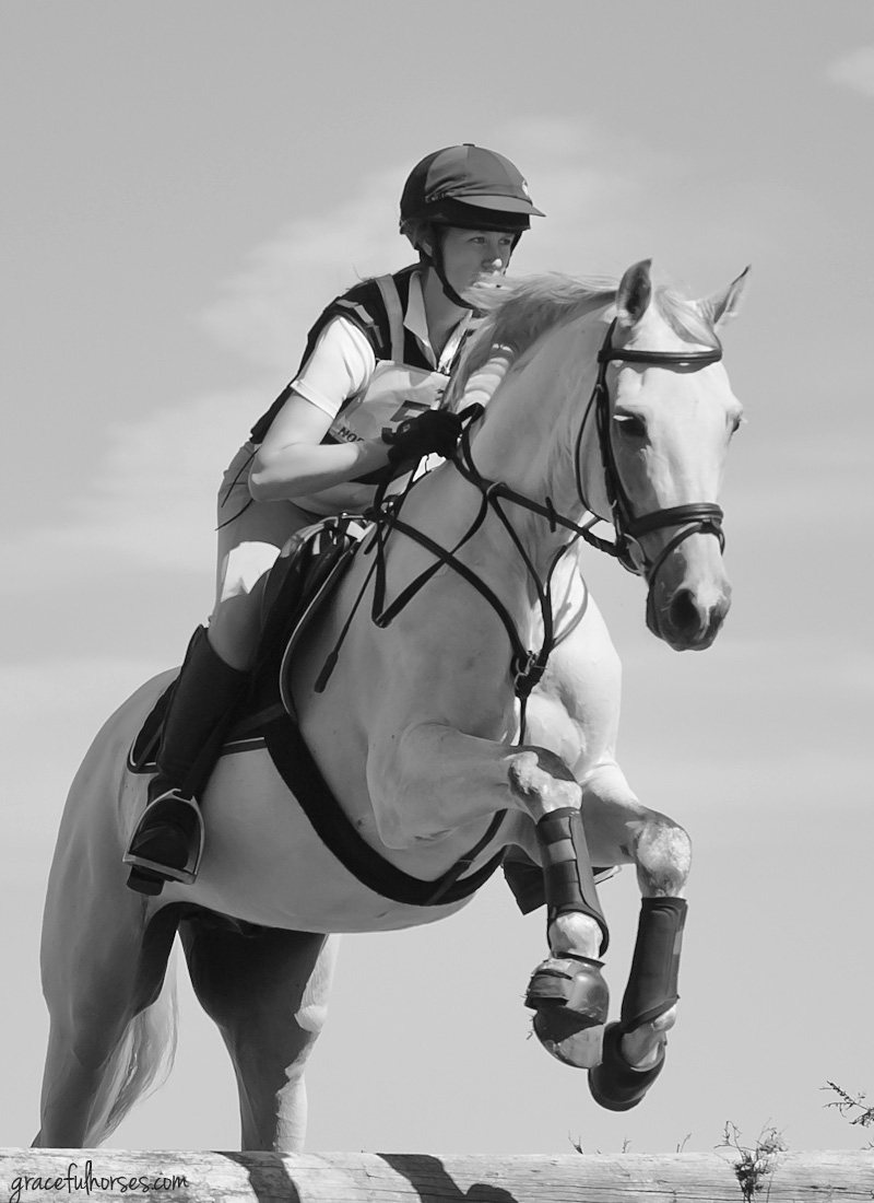 Myrddin Equestrian Show jumping