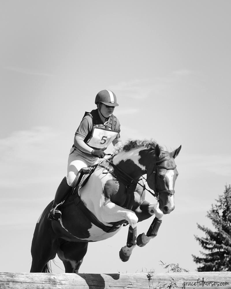 Myrddin show jumping