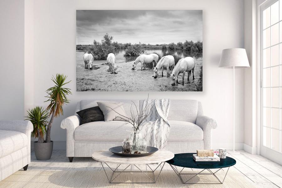Equine wall art by Manuela Stefan