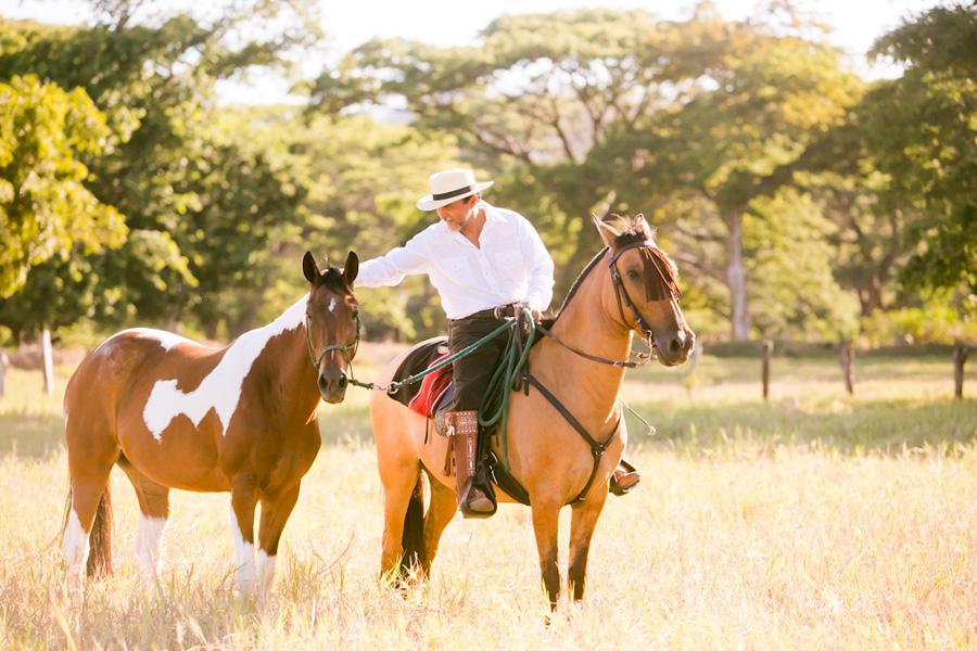 Guanacaste horses