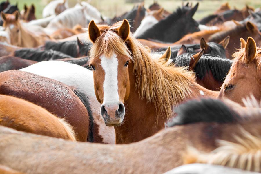 Montana horse